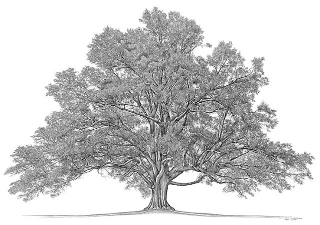 Family Tree Roots Background 4