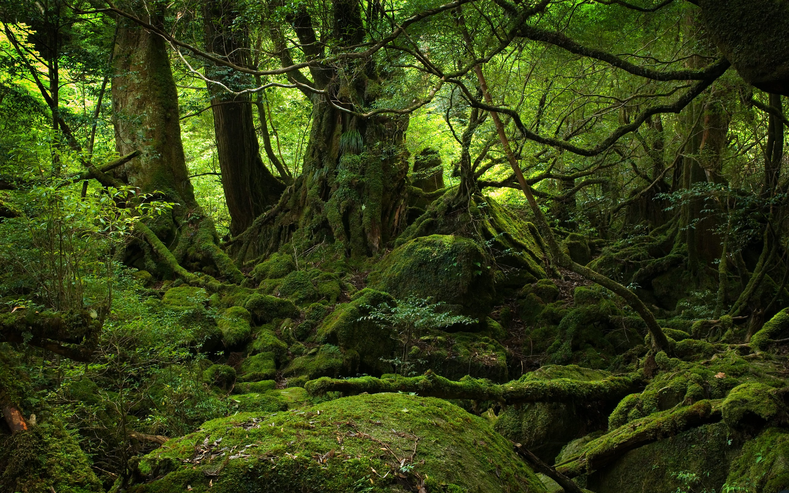 Forest Wallpaper Fantasy Green Forest Wallpaper