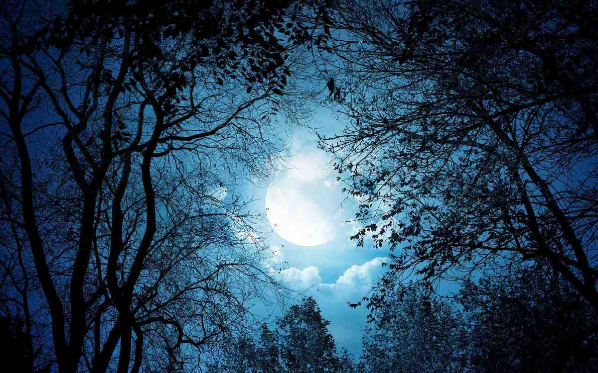 Forest At Night With Moon  1 Forest At Night With Moon