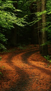 Forest Path Road iphone 5 wallpaper ilikewallpaper_com 169×300