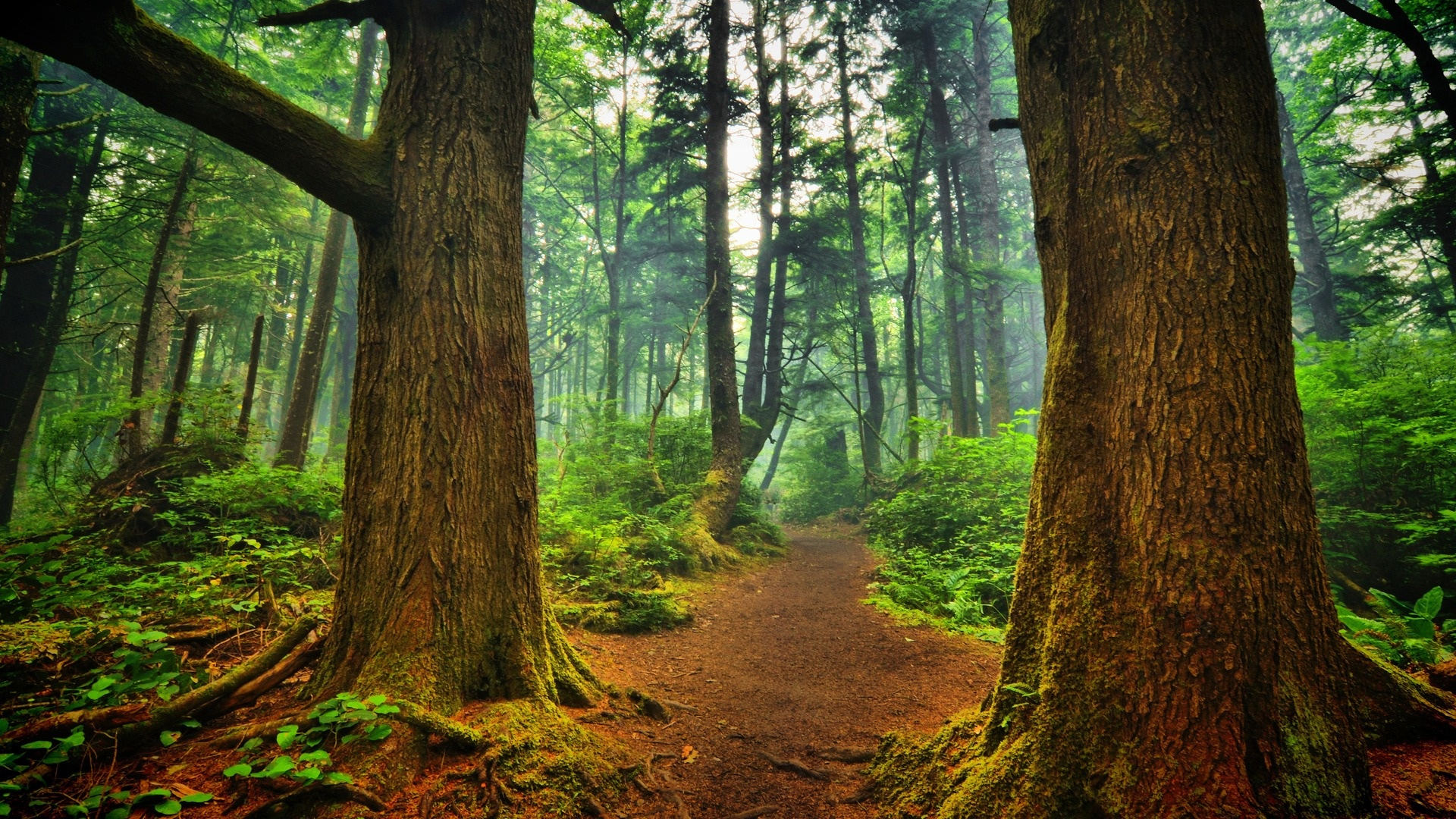 Forest Photos Forest Pathway Wallpaper