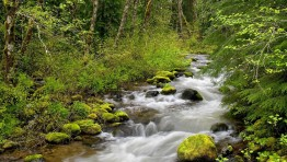 Forest River Wallpapers 3