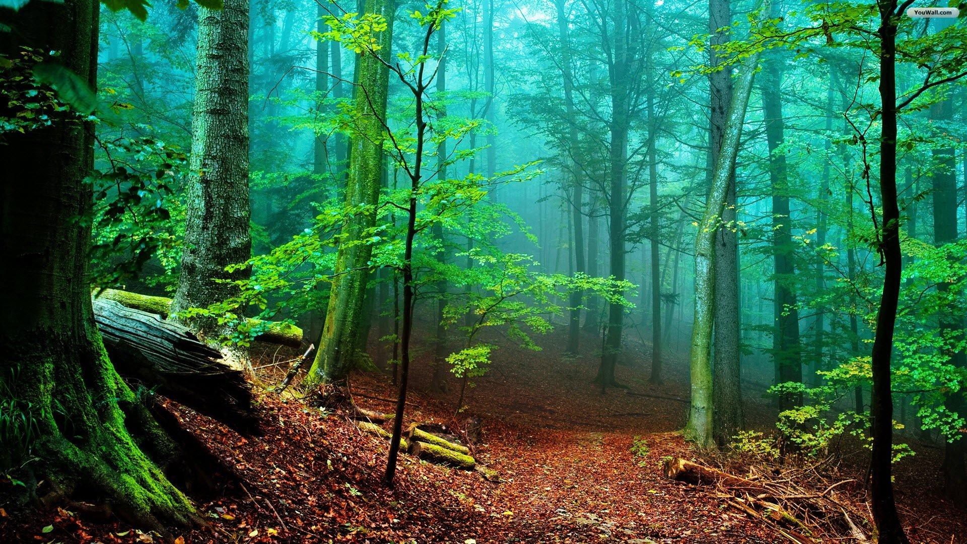 Forest Wallpaper Forest Wallpaper
