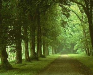 Forest Wallpaper 5 300×240