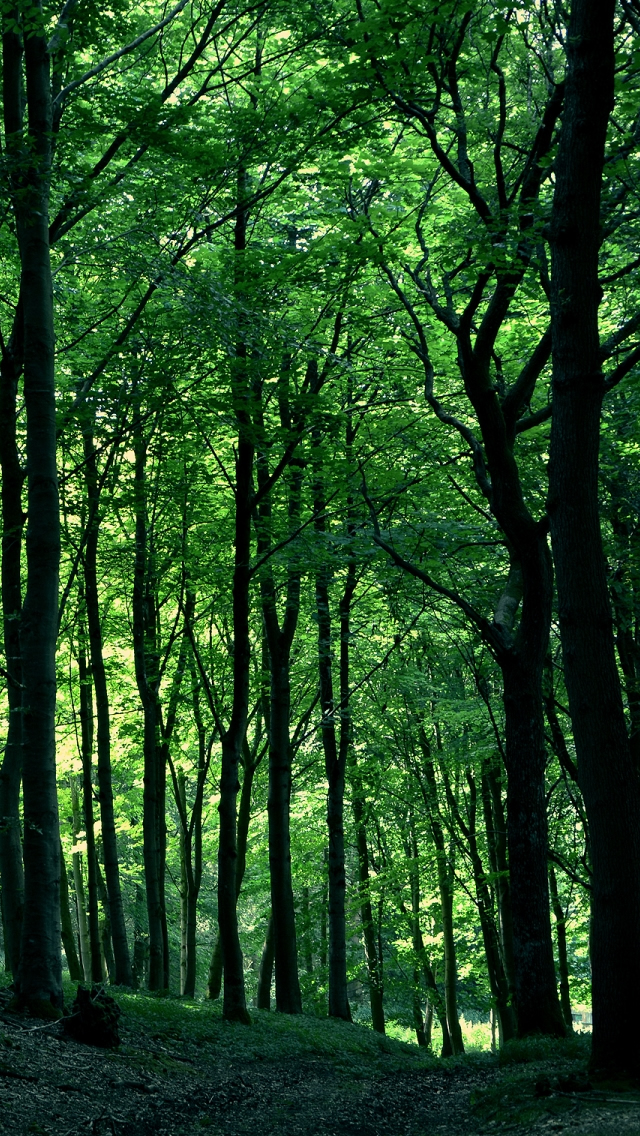 Green Forest Tree iPhone 5s Wallpaper