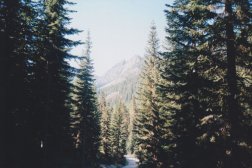 Image Gallery mountain forest tumblr
