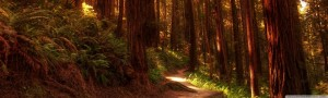 Redwood Forest Wallpaper Widescreen 3 300×90