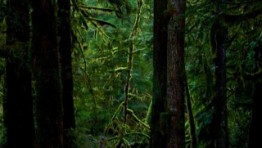 dark forest wallpapers_8746_320x480