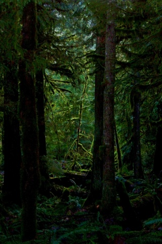 dark forest wallpapers_8746_320x480
