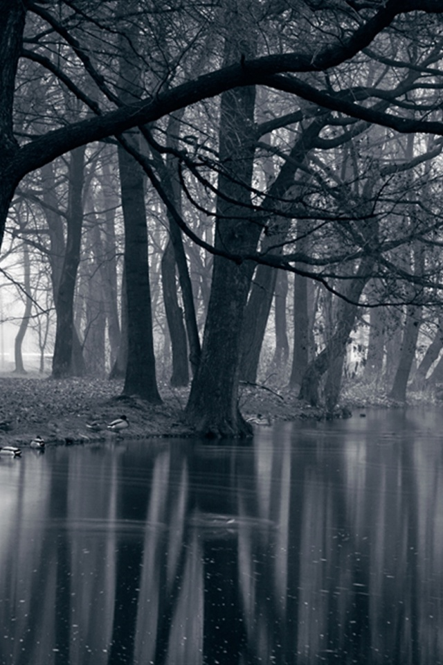 Mystic Park Dark Forest Sea Wallpaper