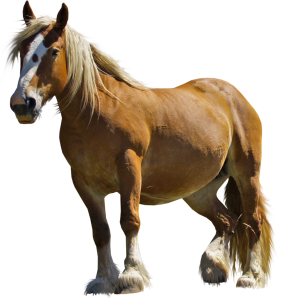 Horse Clipart 27 281×300