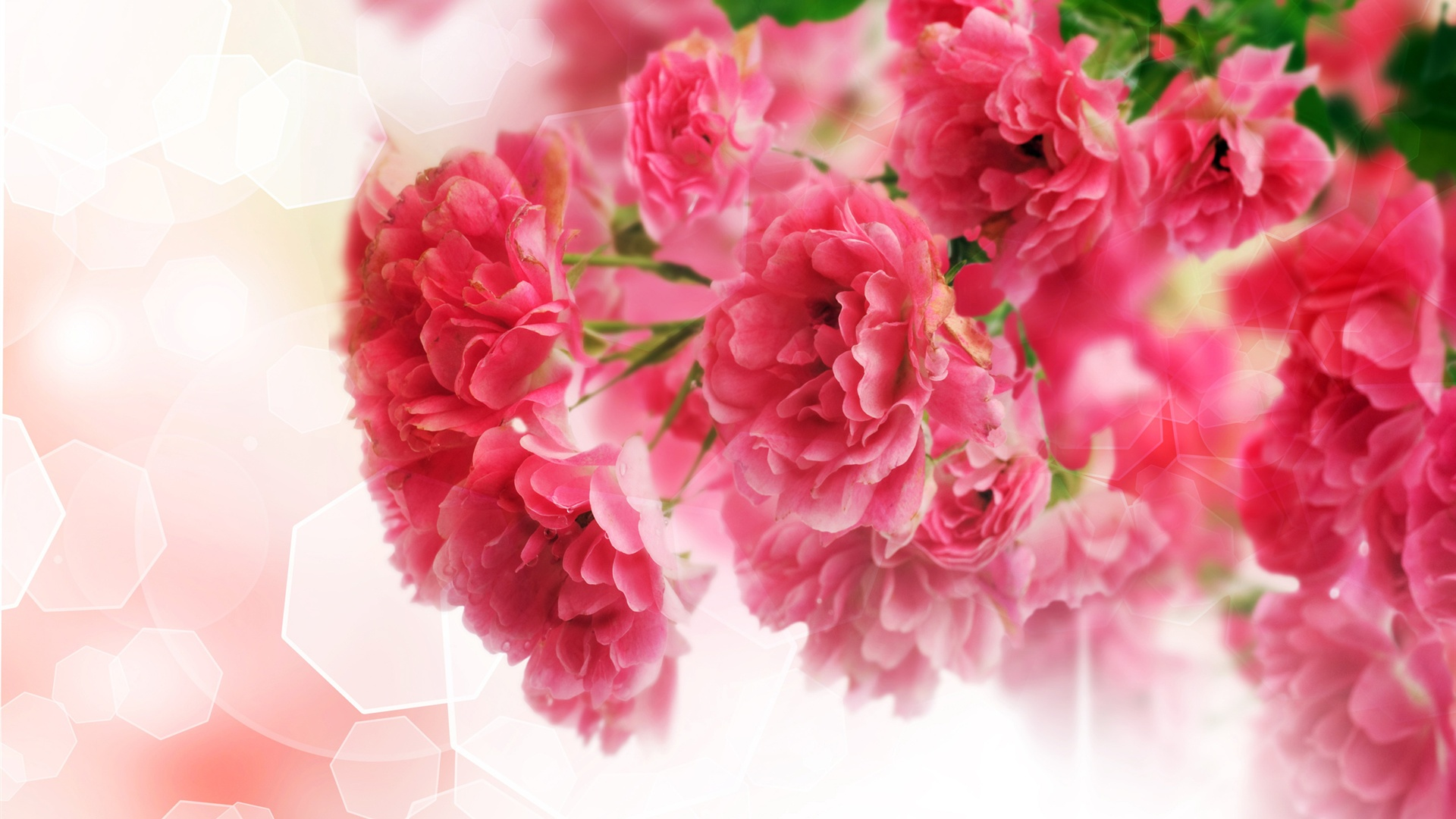 Pink Carnations Wallpaper 9