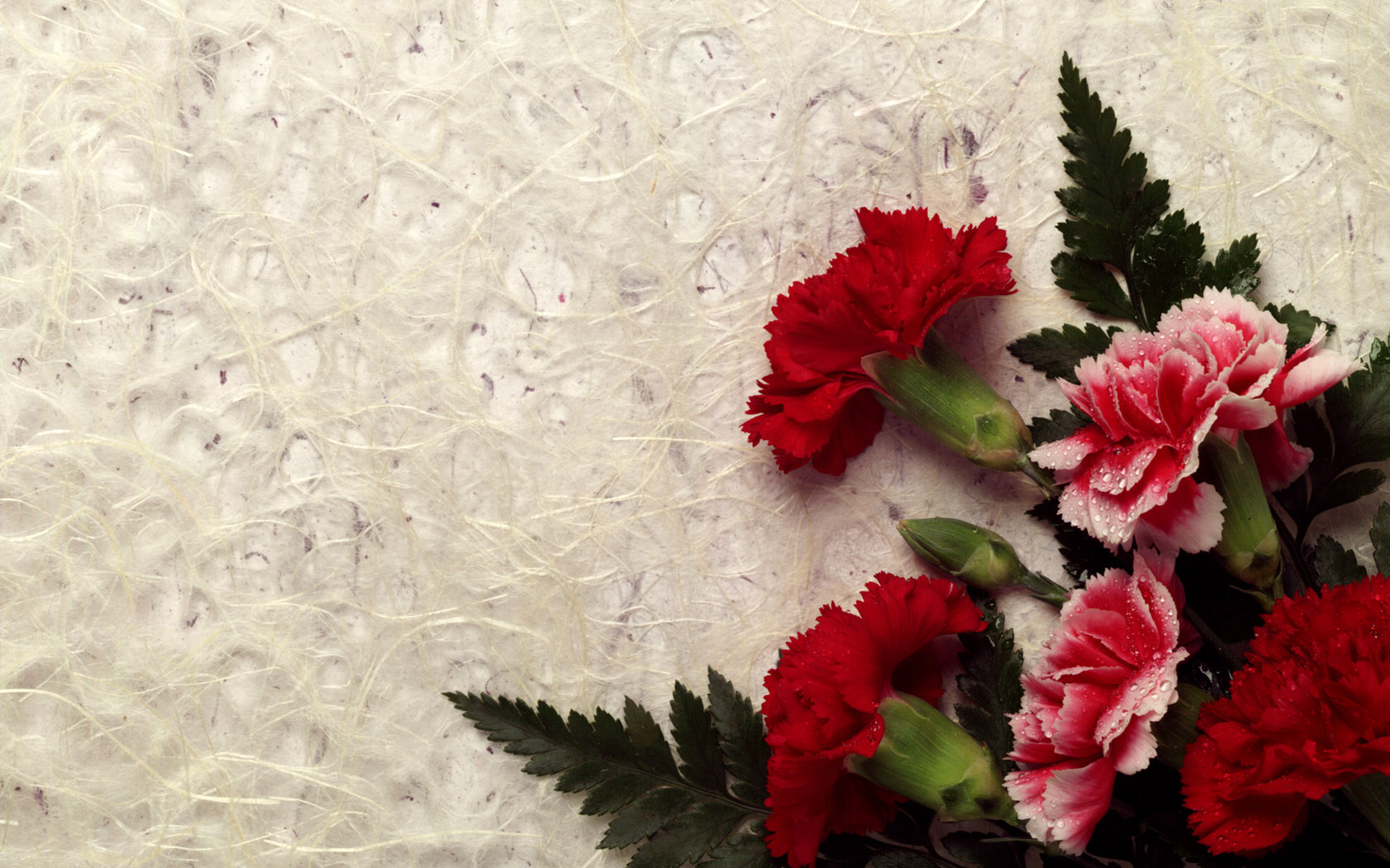 Red Carnations Wallpaper 1