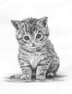 Amazing Art Drawings Of Animals 3