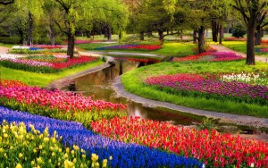 Amazing Flower Garden Wallpaper 2 300×188