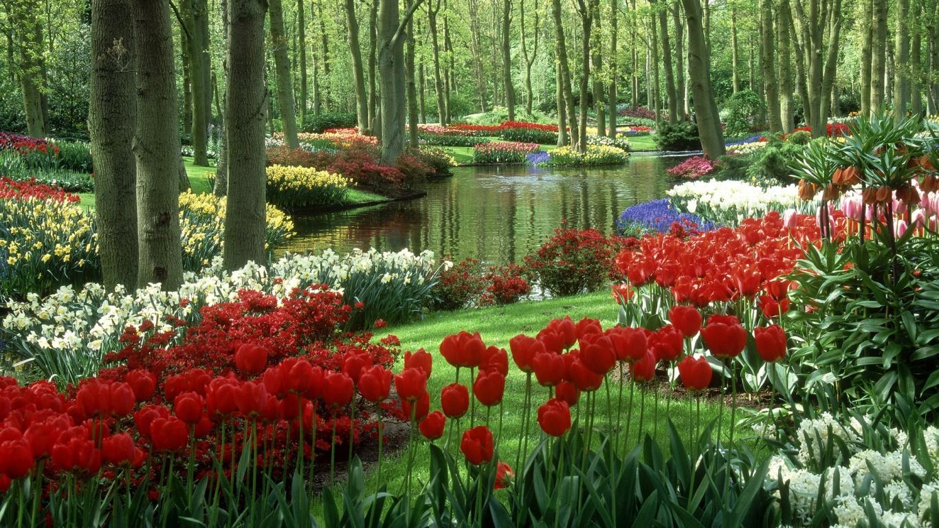 Hd Flower Garden Wallpaper Free Hd Wallpapers