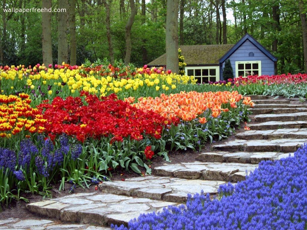 Hd flower garden wallpaper free hd wallpapers funmozar amazing wallpapers description amazing flower garden mightylinksfo