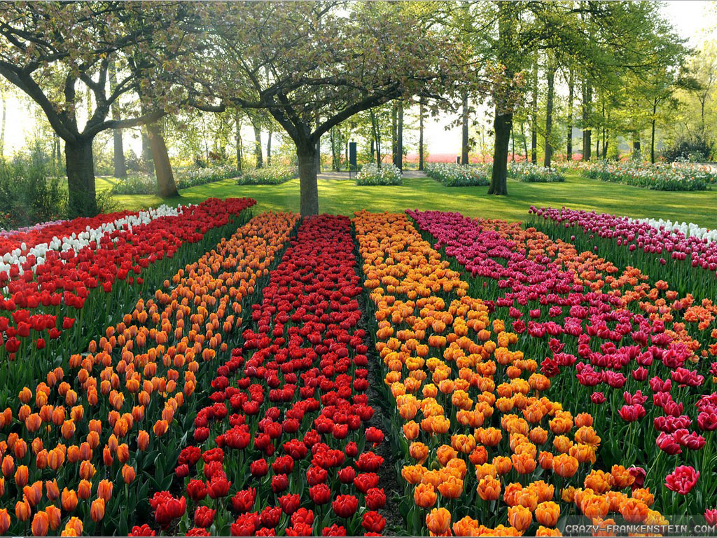 Beautiful flower garden wallpapers best hd wallpapers for Amazing flower gardens