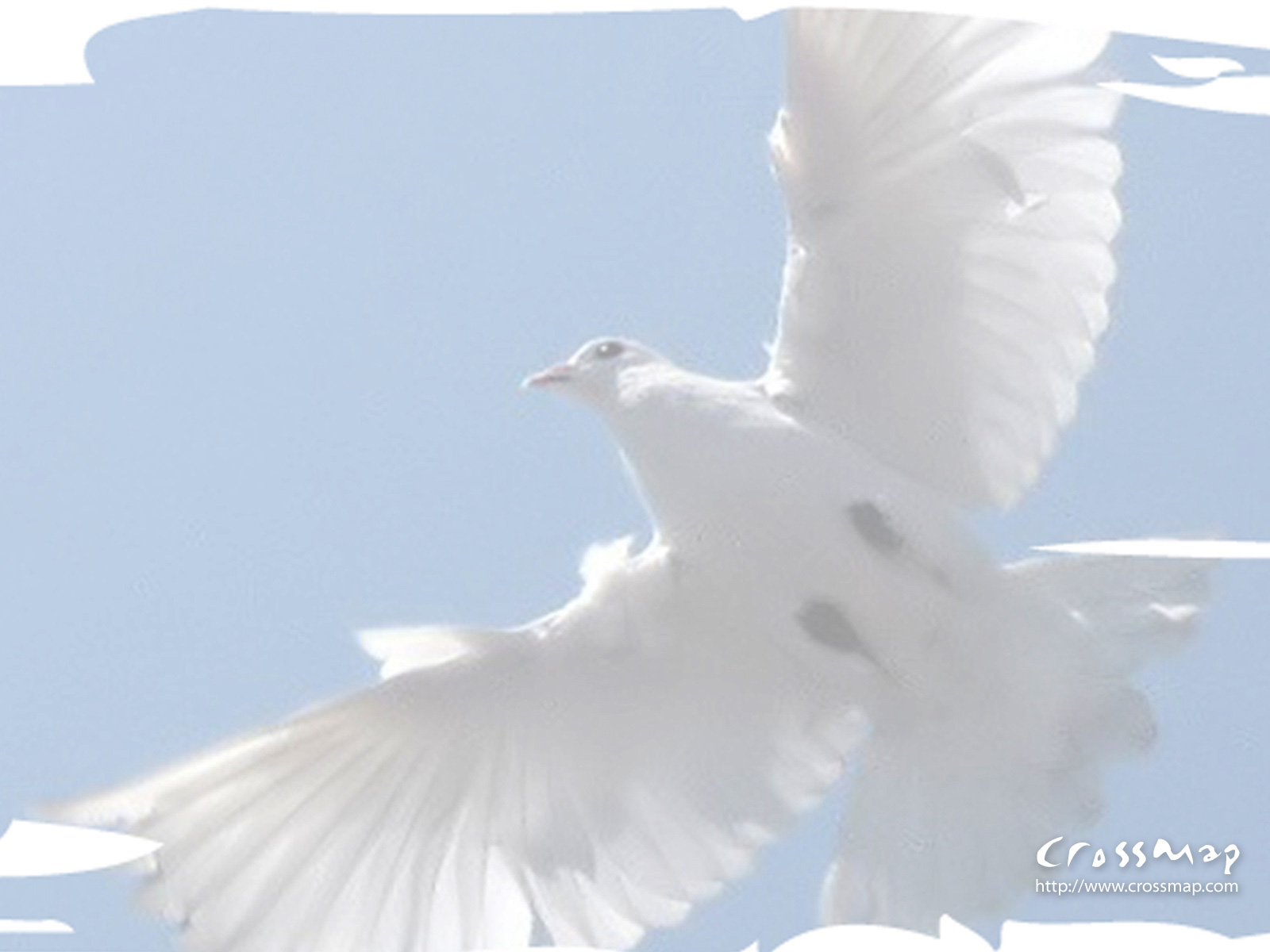 Cross and dove background - photo#1