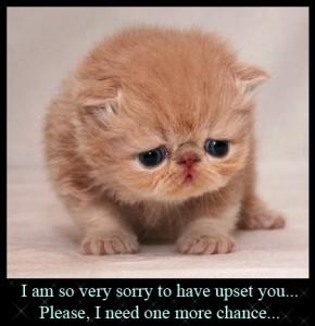 Cute Apology 8 290×300