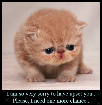 Cute Apology 8