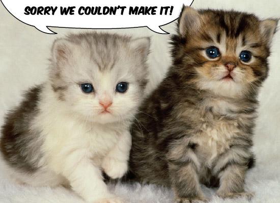 Cute Apology Cat 2