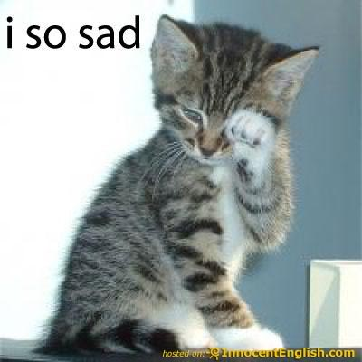 Cute Apology Cat 8