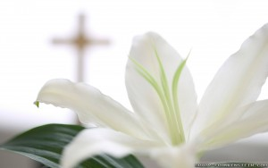 Easter Religious Backgrounds 5 300×188