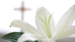 Easter Religious Backgrounds 5 768×480