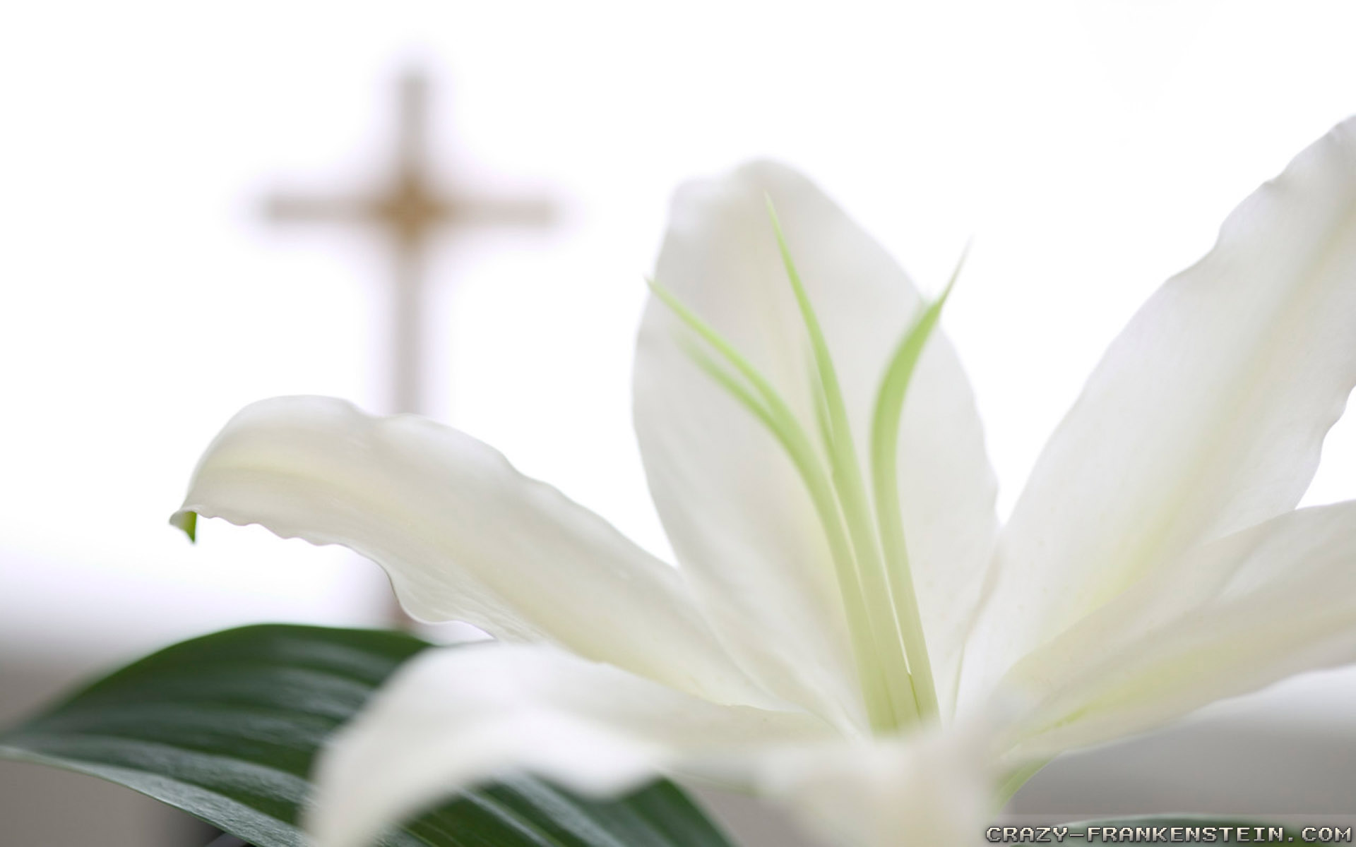 Easter Religious Backgrounds 5