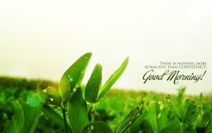 Good Day Images Wallpaper 23 300×188