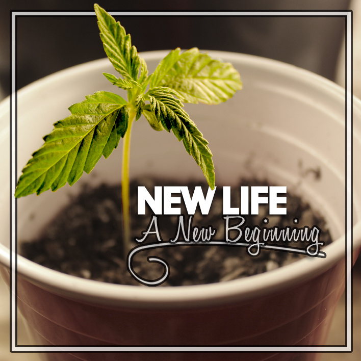 New Life New Beginning Cover Photo 13