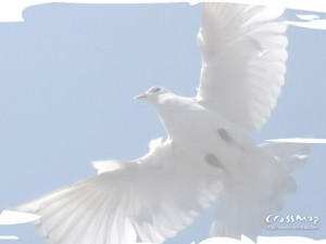 Religious Dove Backgrounds 1 300×225