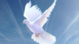 Religious Dove Backgrounds 3 300×225 262×148