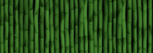 Bamboo Background 2 300×105