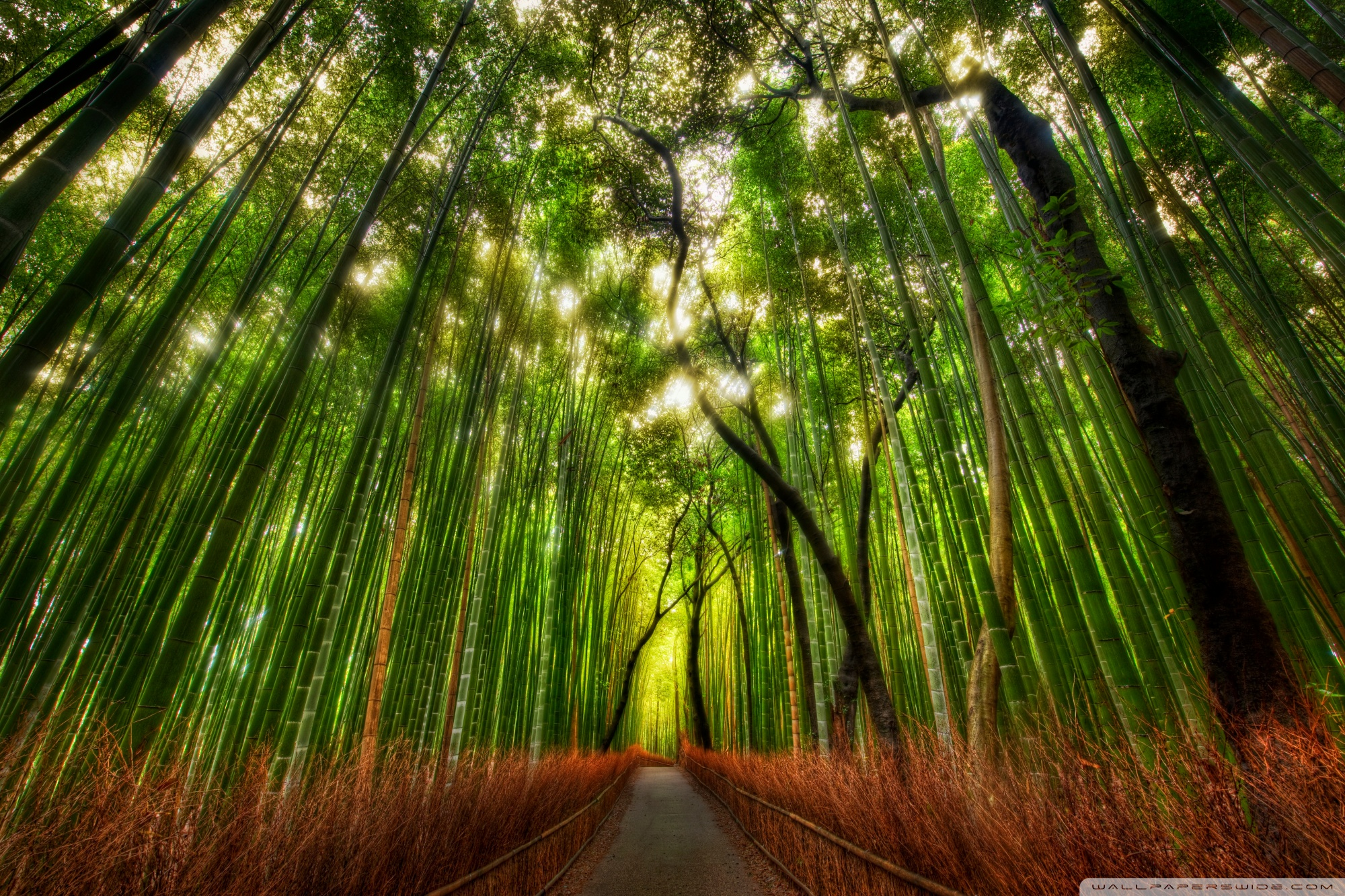 Bamboo Forest Wallpapers 6
