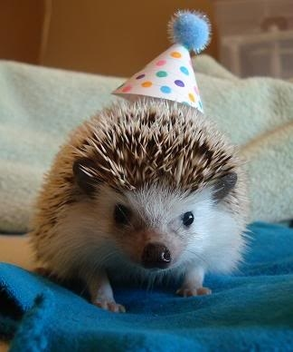 Happy Birthday Cute Animals 13