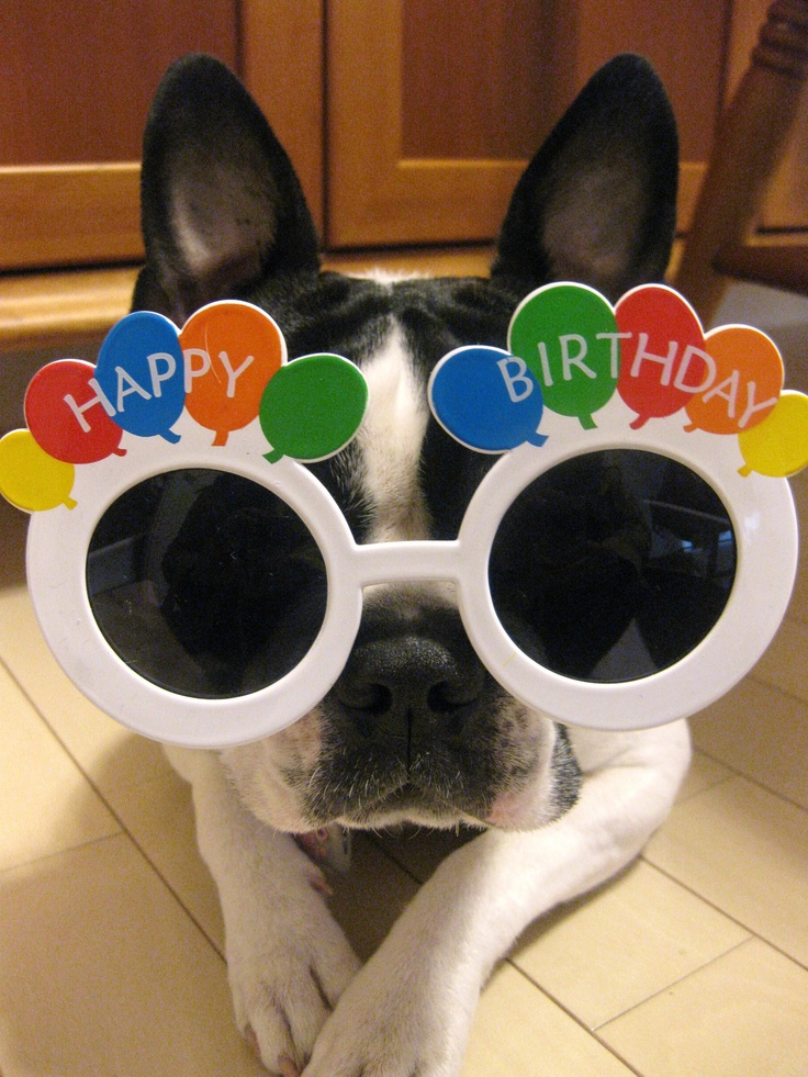 Happy Birthday Cute Animals 16