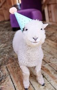 Happy Birthday Cute Animals 27 193×300