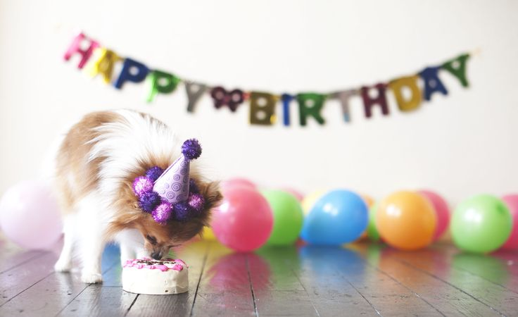 Cute Happy Birthday Images With Dogs - impremedia.net Doge Birthday 21