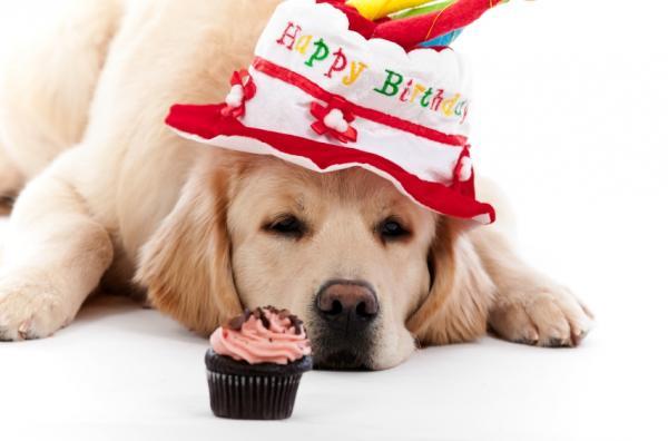 Cute Birthday Dogs
