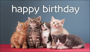 Happy Birthday Cute Kitten 14 300×175