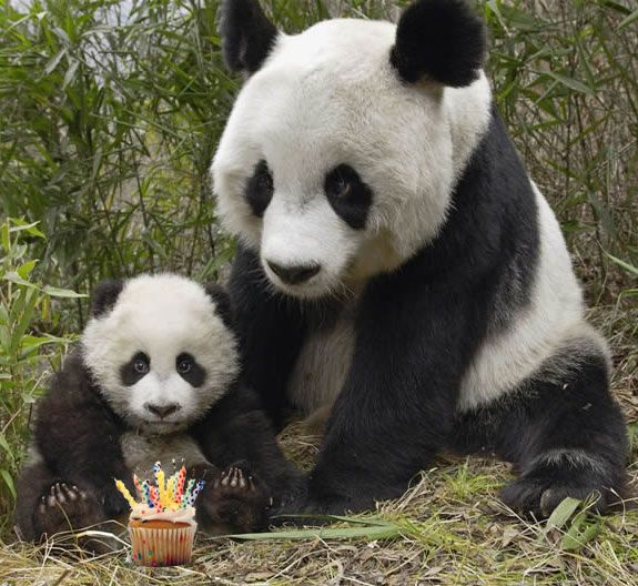 Happy Birthday Cute Panda 12