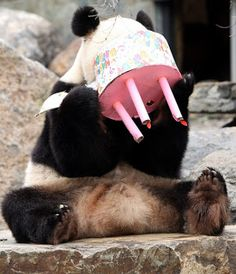 Happy Birthday Cute Panda 23
