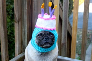 Happy Birthday Dog Funny 10 300×200