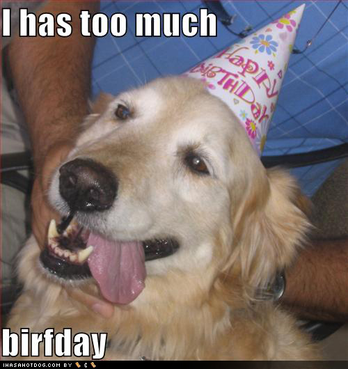 Happy Birthday Dog Funny 7