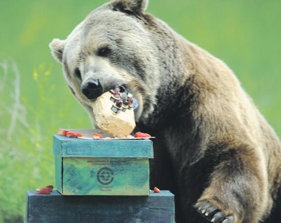 Happy Birthday Grizzly Bear 2