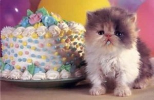 Happy Birthday Kitten 1 300×196