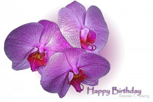 Happy Birthday Orchid Flower Images 10 300×201