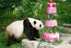 Happy Birthday Panda Bear 18 300×202
